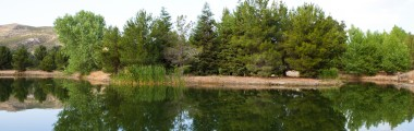 Pine Lake - Water - Reflection - Pine Trees