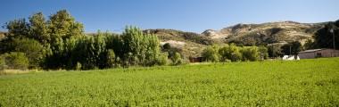 hay-field-landscape