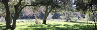 park meadow (3)